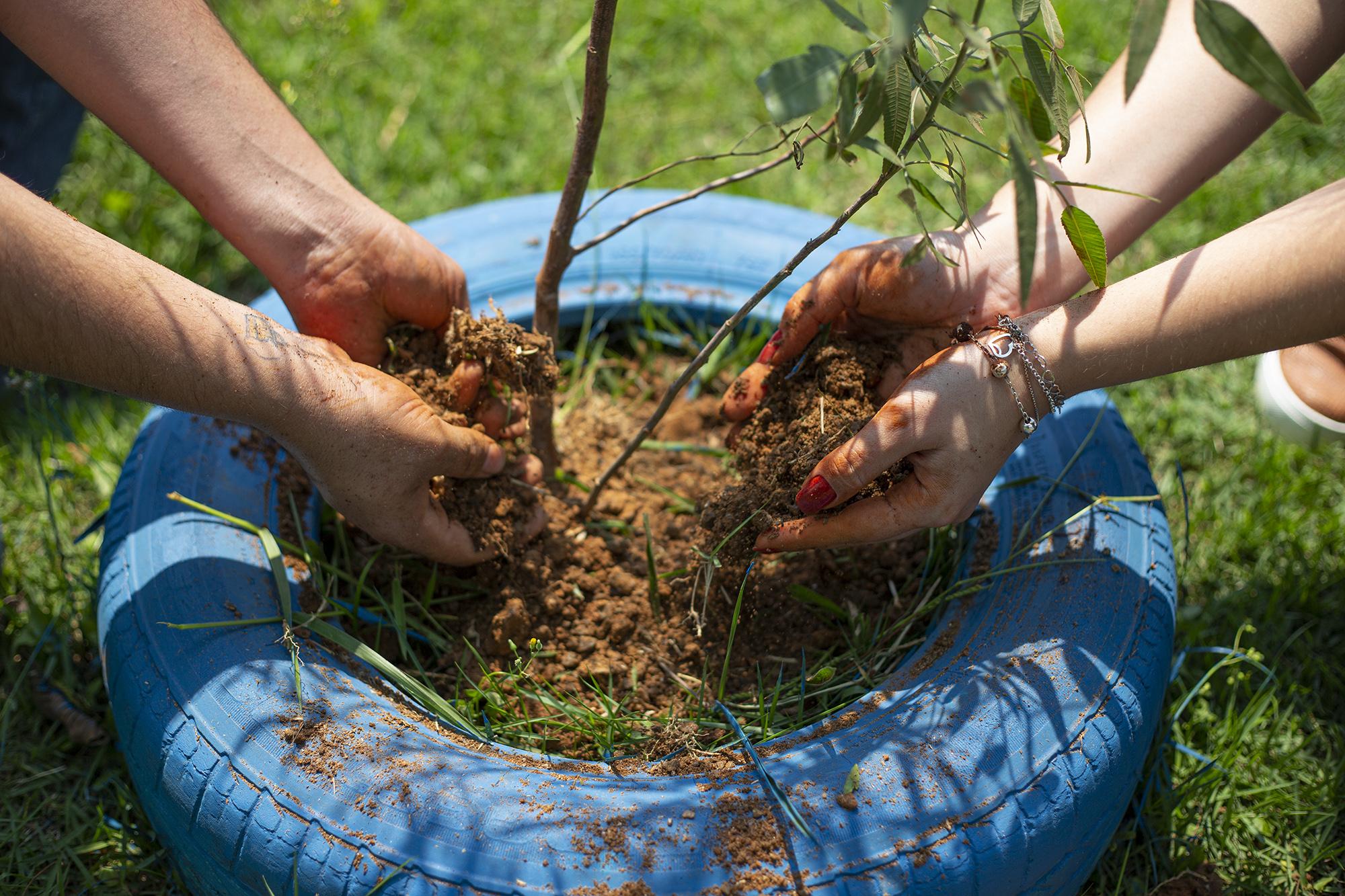 Dia da Árvore: Secretaria do  Verde realiza plantio no lançamento do Projeto Reflexão e Ação